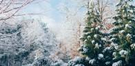 Unsplash photo-Winter wonderland cropped