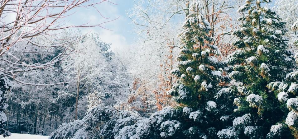 Unsplash photo-Winter wonderland