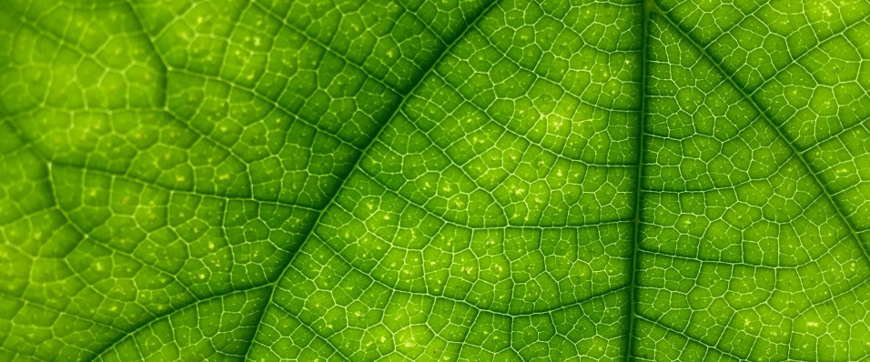 Unsplash photo-Close up leaf 2 cropped