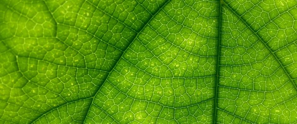 Unsplash photo-Close up leaf 2 cropped