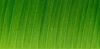 Unsplash photo-Close up leaf cropped
