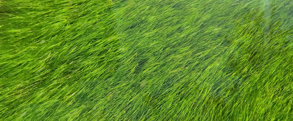 Unsplash photo-Close up grass cropped