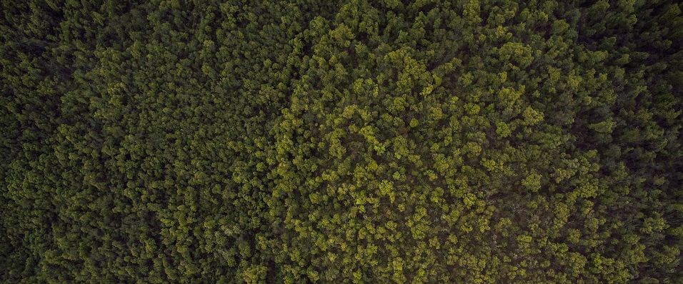 Unsplash photo-Tree tops from above cropped