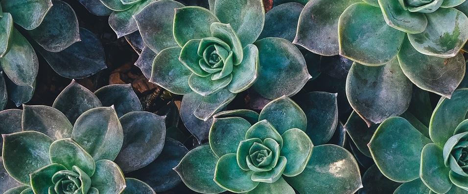 Unsplash photo-plants cropped